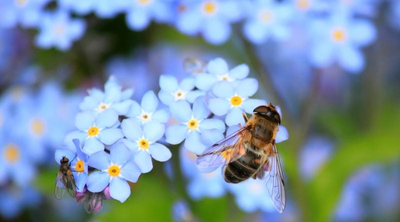 pszczola pszczoly 3 800x445 - 20 maja - Światowy Dzień Pszczół