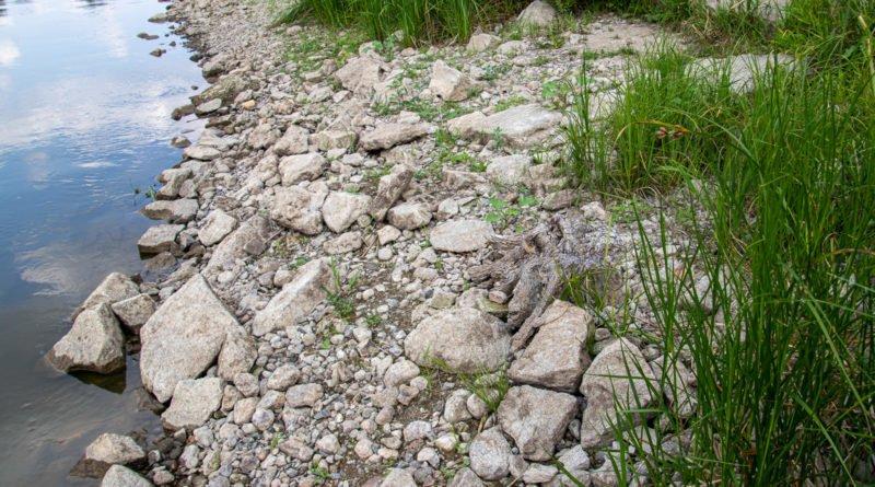 z biegiem warty i cybiny s. wachala 12 800x445 - Susza. Zobacz jak wyglądają poznańskie rzeki!