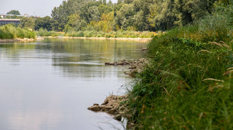 z biegiem warty i cybiny s. wachala 14 800x445 - Susza. Zobacz jak wyglądają poznańskie rzeki!