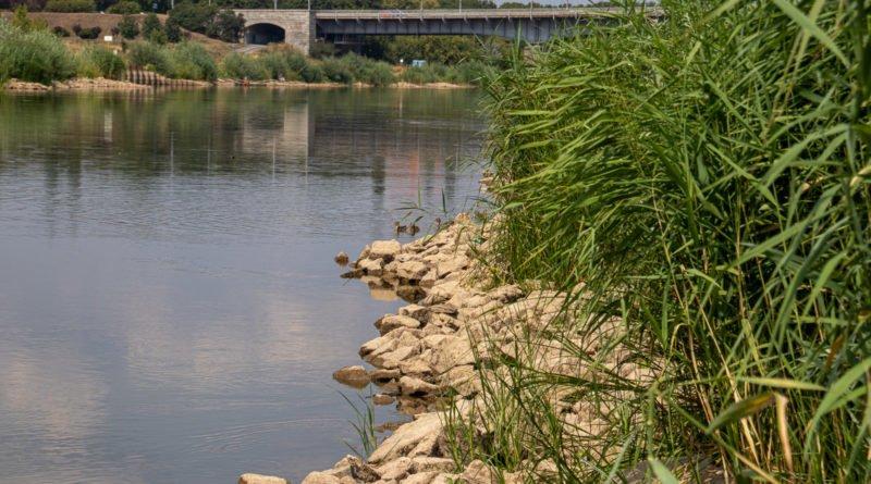 z biegiem warty i cybiny s. wachala 32 800x445 - Susza. Zobacz jak wyglądają poznańskie rzeki!