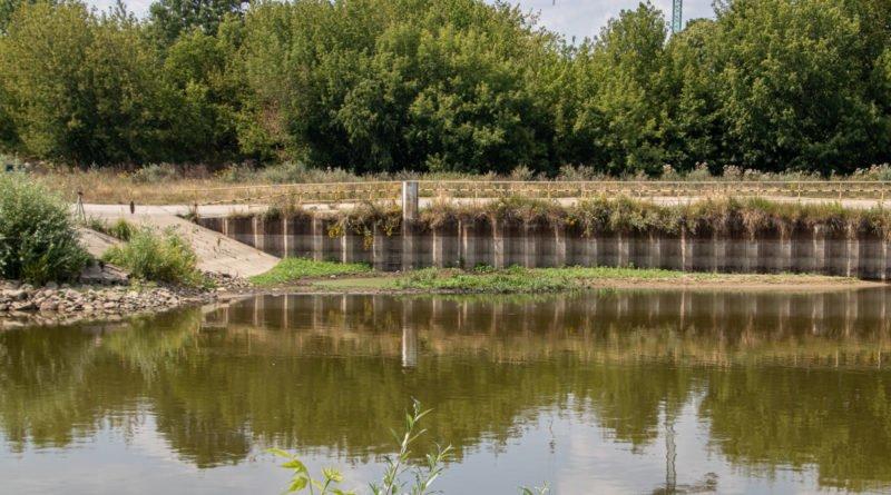 z biegiem warty i cybiny s. wachala 38 800x445 - Susza. Zobacz jak wyglądają poznańskie rzeki!
