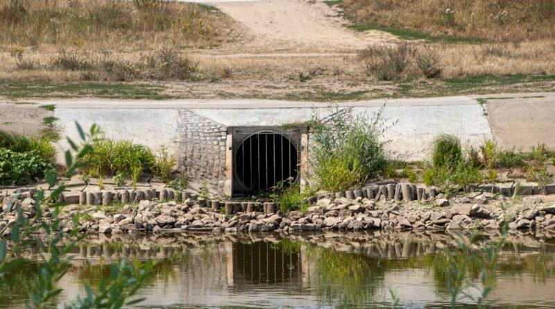z biegiem warty i cybiny s. wachala 41 800x445 - Susza. Zobacz jak wyglądają poznańskie rzeki!