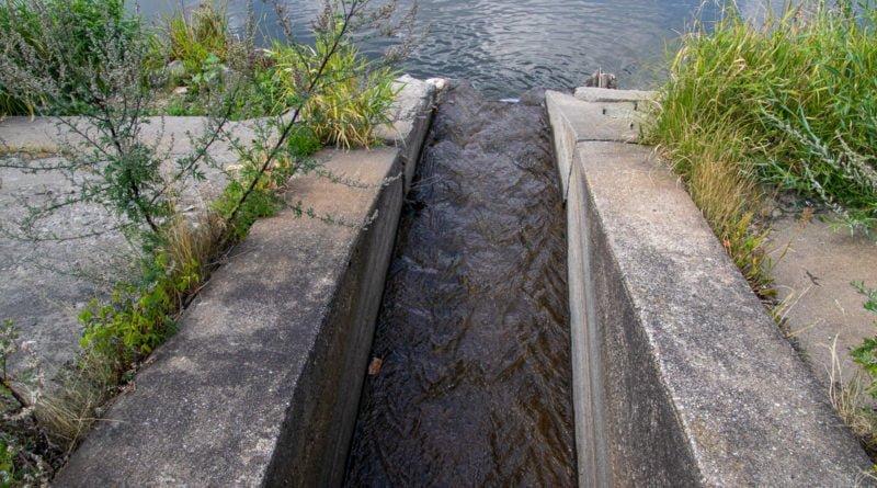 z biegiem warty i cybiny s. wachala 44 800x445 - Susza. Zobacz jak wyglądają poznańskie rzeki!