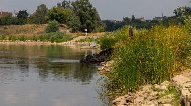 z biegiem warty i cybiny s. wachala 49 800x445 - Susza. Zobacz jak wyglądają poznańskie rzeki!