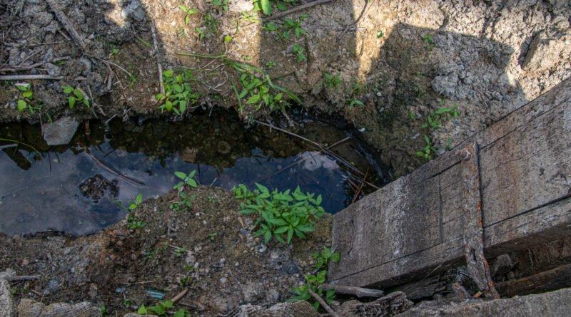 z biegiem warty i cybiny s. wachala 54 800x445 - Susza. Zobacz jak wyglądają poznańskie rzeki!