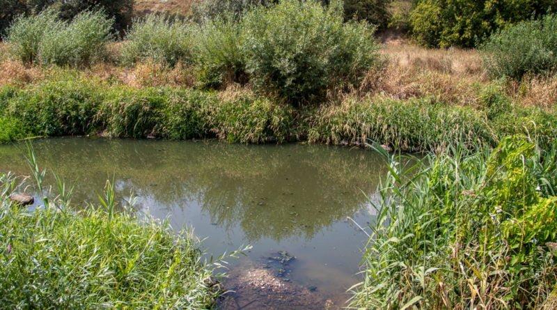 z biegiem warty i cybiny s. wachala 67 800x445 - Susza. Zobacz jak wyglądają poznańskie rzeki!