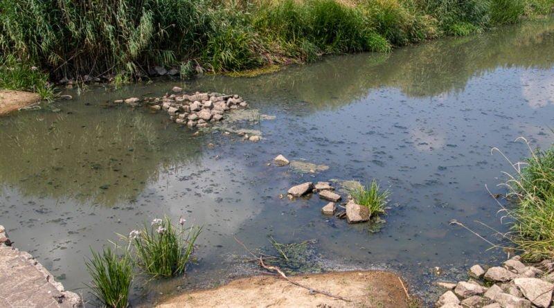 z biegiem warty i cybiny s. wachala 68 800x445 - Susza. Zobacz jak wyglądają poznańskie rzeki!