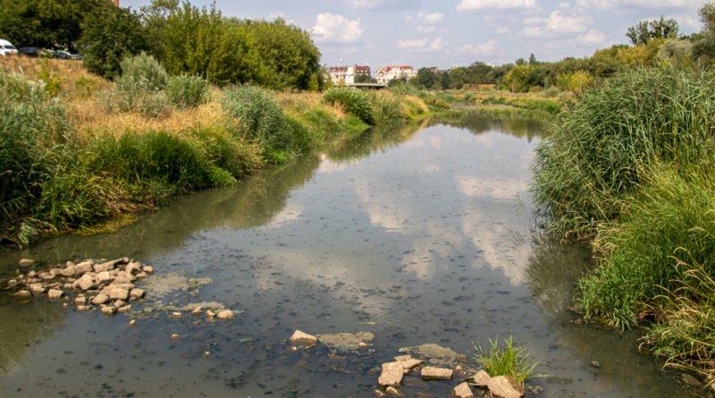 z biegiem warty i cybiny s. wachala 72 800x445 - Susza. Zobacz jak wyglądają poznańskie rzeki!