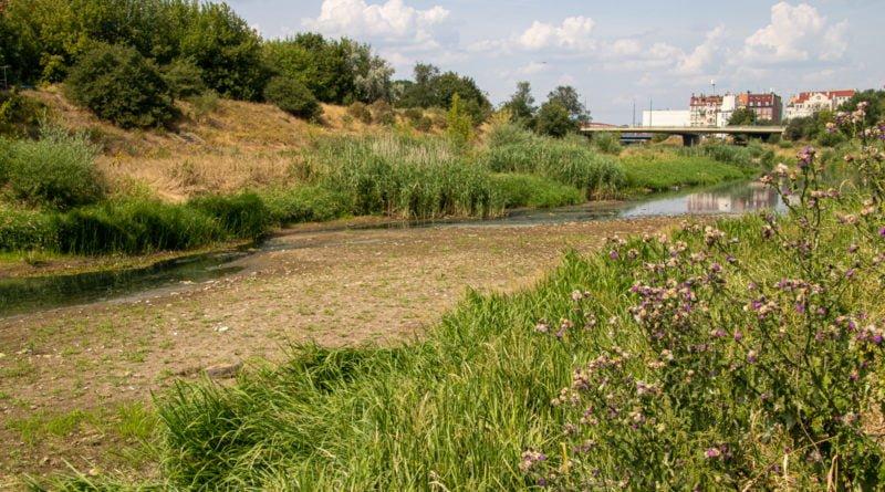 z biegiem warty i cybiny s. wachala 74 800x445 - Susza. Zobacz jak wyglądają poznańskie rzeki!