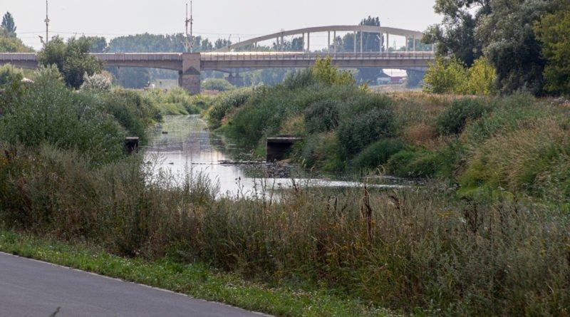 z biegiem warty i cybiny s. wachala 80 800x445 - Susza. Zobacz jak wyglądają poznańskie rzeki!