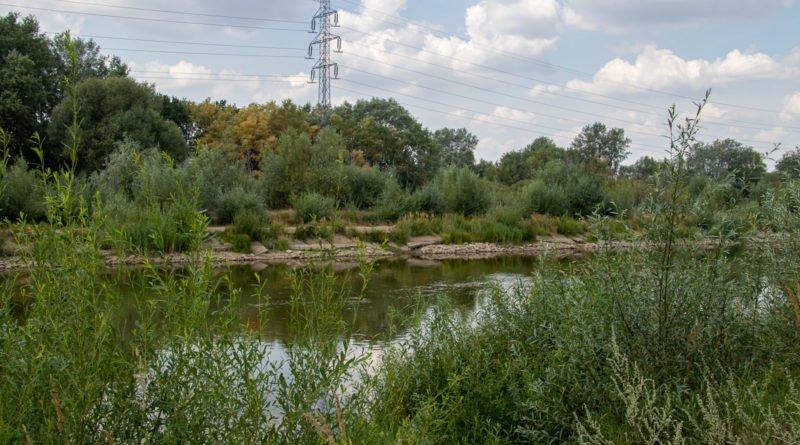 z biegiem warty i cybiny s. wachala 9 800x445 - Susza. Zobacz jak wyglądają poznańskie rzeki!