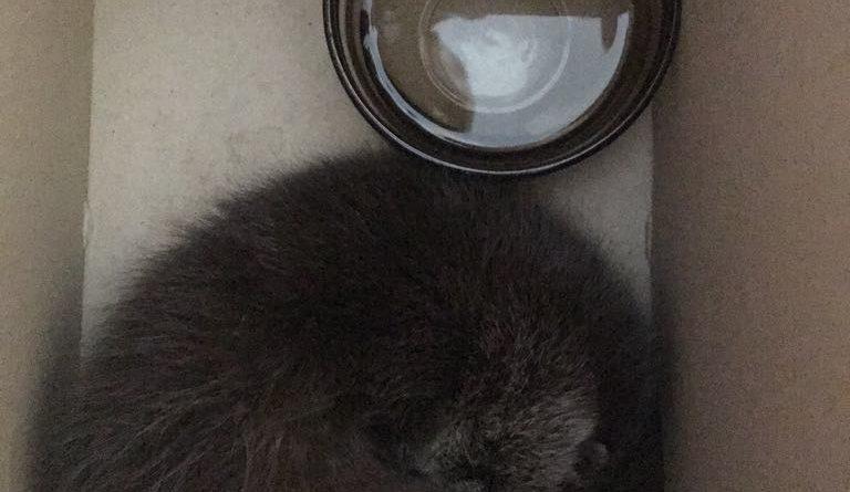 pileczka fot. um pila 2 768x445 - Piła: Ktoś porzucił młodą wydrę. Ma zaledwie sześć tygodni