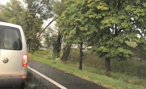wichura 2 - Kobylnica: Uwaga na wichurę i połamane drzewa!
