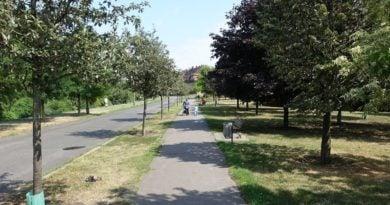 zielen fot. zdm 390x205 - Poznań: Na Łazarzu i Jeżycach pojawi się więcej zieleni!