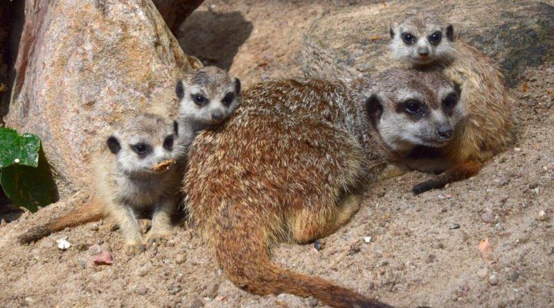 zoo fot. ump 2 800x445 - Poznań: Zobacz maluchy z zoo! (zdjęcia)