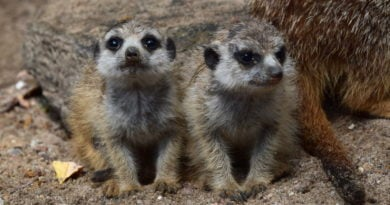 zoo fot. ump 3 390x205 - Poznań: Zobacz maluchy z zoo! (zdjęcia)