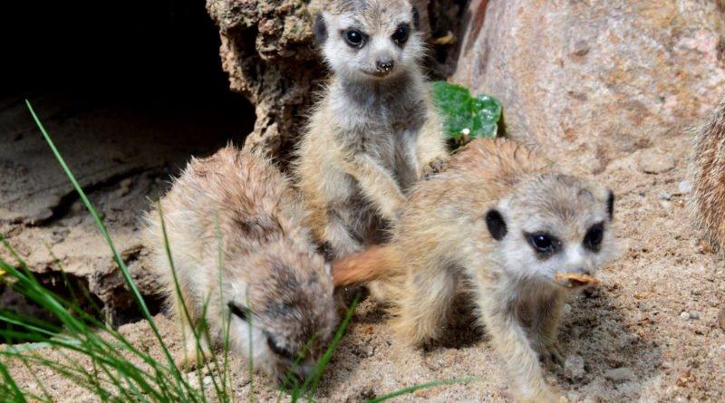 zoo fot. ump 4 800x445 - Poznań: Zobacz maluchy z zoo! (zdjęcia)
