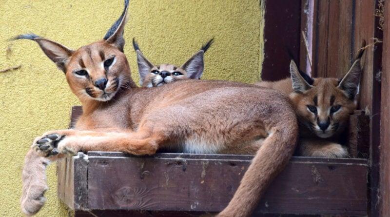 zoo fot. ump 5 800x445 - Poznań: Zobacz maluchy z zoo! (zdjęcia)