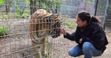 Ewa Zgrabczyńska i tygrys fot. zoo