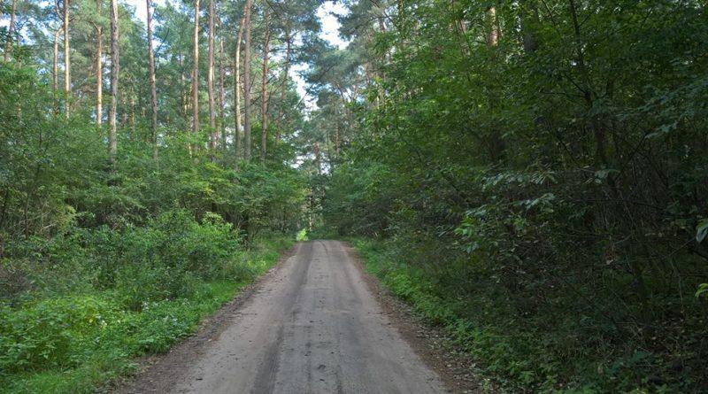 las 800x445 - Oborniki: Leśnicy apelują  o ochronę wszystkich stworzeń