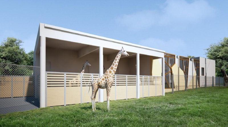 nowy wybieg 2 fot.pim  800x445 - Poznań: Będzie nowy wybieg dla żyraf i nosorożców