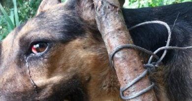 pies znaleziony przez policję fot. KPP Wągrowiec (4)
