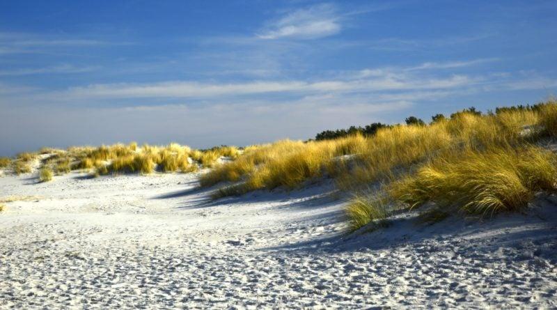 plaża wydmy