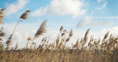pole wiatr rolnictwo 390x205 - Wielkopolska: Czy politycy PiS chcą zniszczyć rolnictwo w Wielkopolsce?