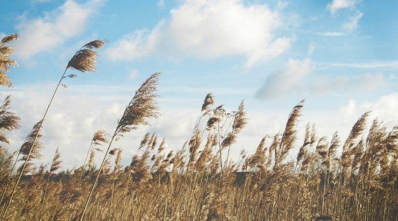 pole wiatr rolnictwo 800x445 - Poznań: Kościół katolicki kupił ponad 100 ha ziemi pod miastem