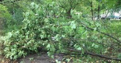 przewrocone drzewo wiatr fot. e.suska  1 390x205 - Wielkopolska: Ponad 500 interwencji strażaków w całym regionie