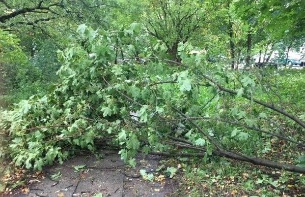 przewrocone drzewo wiatr fot. e.suska  1 - Wielkopolska: Ponad 500 interwencji strażaków w całym regionie