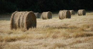 stogi siana rolnictwo