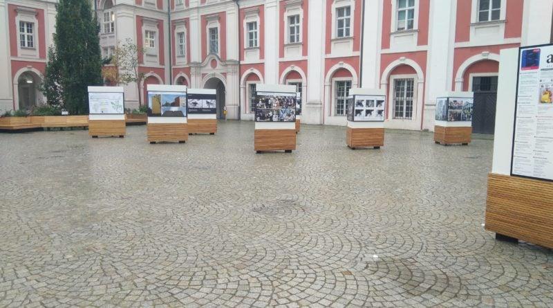 urzad miasta w poznaniu 2 800x445 - Poznań: Seniorzy i niepełnosprawni mogą pojechać na wybory taksówką
