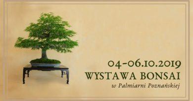Bonsai fot. Palmiarnia Poznańska