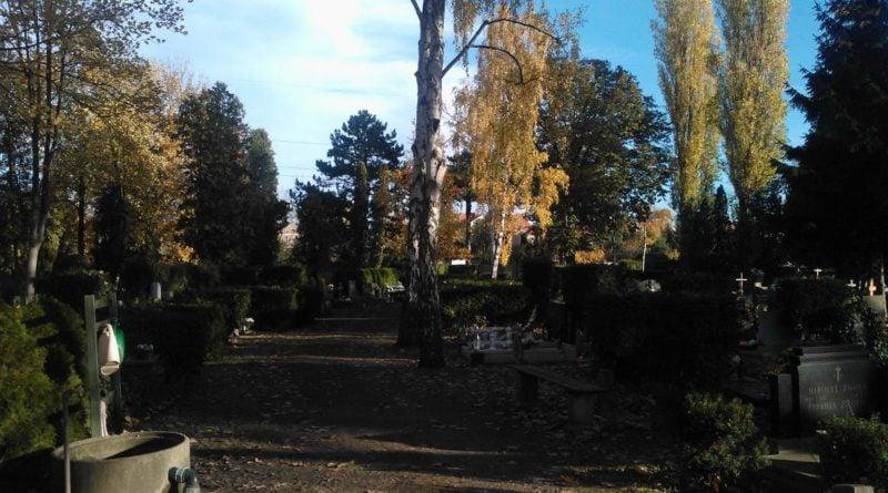 cmentarz wisniowa 4 800x445 - Poznań: Nekropolie bogate w ptaki