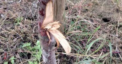 drzewa fot. gddia 390x205 - Jarocin: Kto zniszczył drzewa przy obwodnicy?