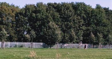 łąka miejska fot. L. Łada