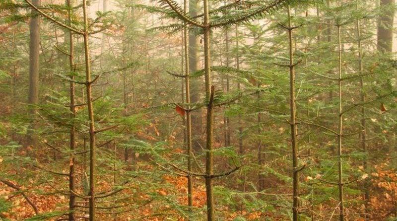 Młody las fot. Lasy Państwowe
