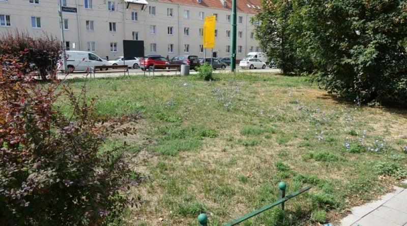 nowe skwery 5 fot. zdm 800x445 - Poznań: Nowe tereny zielone w mieście. Jeszcze tej jesieni!