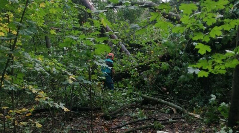 """wiatr wichura efekty fot. nowe zoo 1 800x445 - Poznań: Nowe Zoo zamknięte po wichurze. """"Mamy poważnie uszkodzone wybiegi, powalone drzewa"""""""