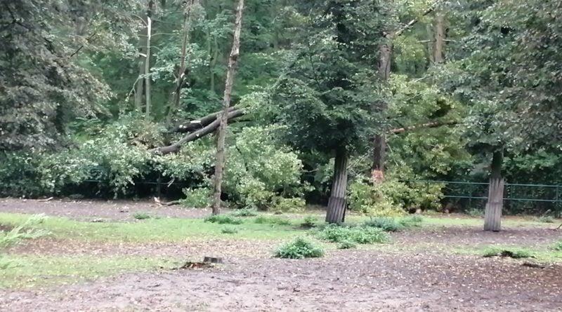 """wiatr wichura efekty fot. nowe zoo 2 800x445 - Poznań: Nowe Zoo zamknięte po wichurze. """"Mamy poważnie uszkodzone wybiegi, powalone drzewa"""""""