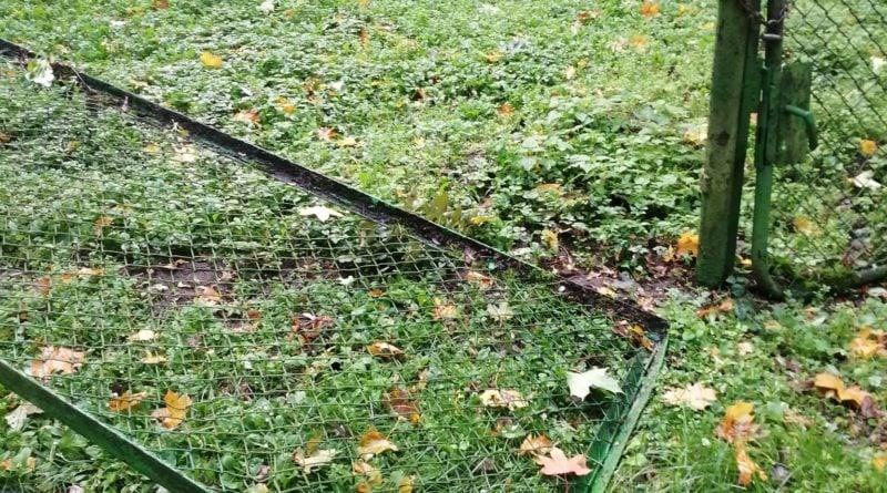 """wiatr wichura efekty fot. nowe zoo 4 800x445 - Poznań: Nowe Zoo zamknięte po wichurze. """"Mamy poważnie uszkodzone wybiegi, powalone drzewa"""""""
