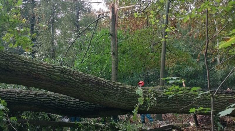 """wiatr wichura efekty fot. nowe zoo 6 800x445 - Poznań: Nowe Zoo zamknięte po wichurze. """"Mamy poważnie uszkodzone wybiegi, powalone drzewa"""""""