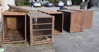 Poznań: Aktywiści protestują przeciwko długodystansowym transportom żywych zwierząt