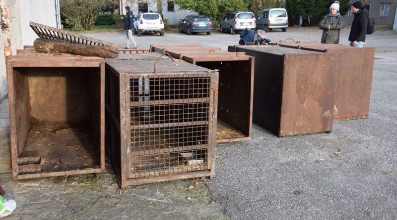 klatki 2 fot. zoo poznan 800x445 - Poznań: Aktywiści protestują przeciwko długodystansowym transportom żywych zwierząt