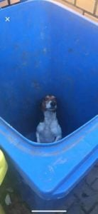"""pies wyrzucony do smietnika fot. pani wiktoria facebook 1 138x300 - Poznań: Wrzucili psa do śmietnika. """"Szukam zwyrodnialca"""""""
