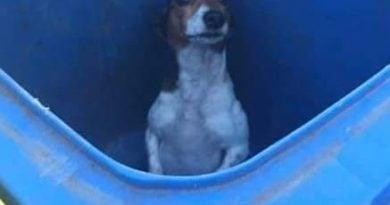 pies wyrzucony do śmietnika fot. pani Wiktoria Facebook