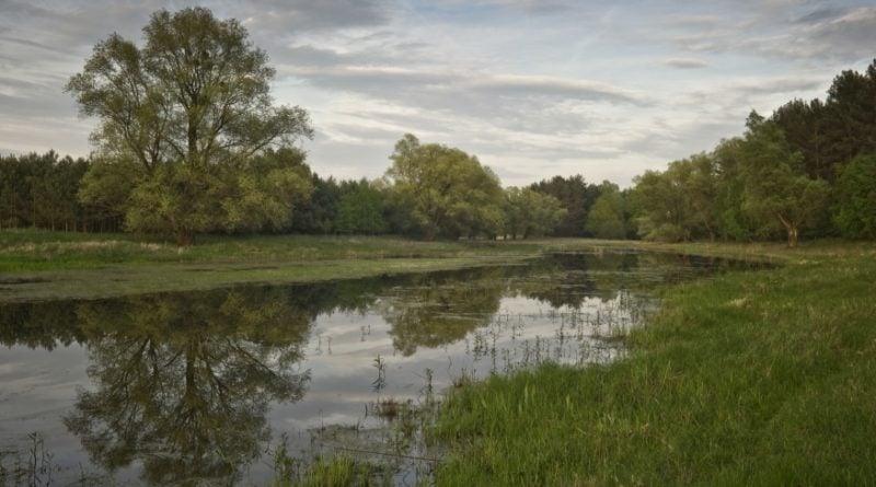 Rezerwat w Krajkowie fot. UMMosina