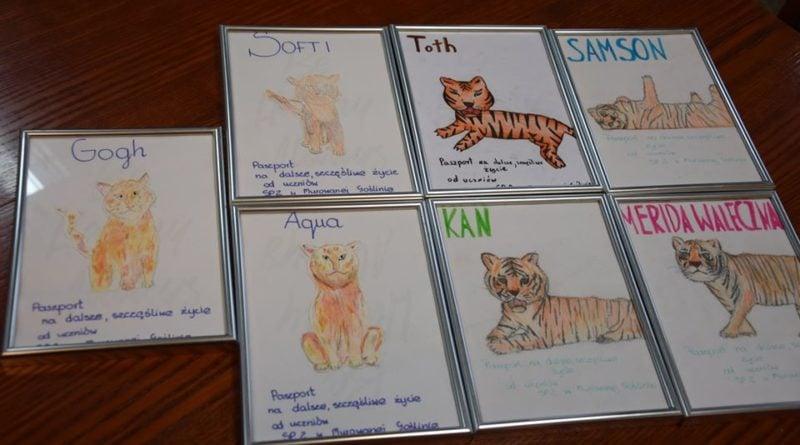 sp murowana goslina i tygrysy 6 fot. zoo poznan 800x445 - Poznań: Gogh ma się troszkę lepiej, ale podróż pozostałych tygrysów do Hiszpanii nadal w zawieszeniu