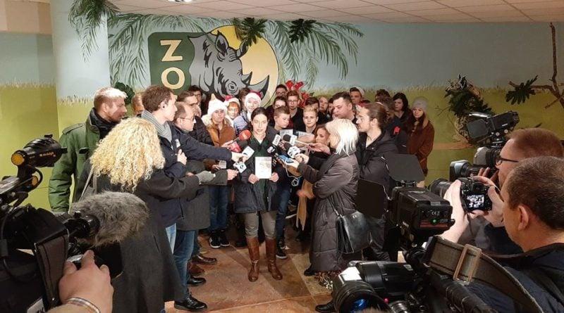 sp murowana goslina i tygrysy fot. zoo poznan 800x445 - Poznań: Gogh ma się troszkę lepiej, ale podróż pozostałych tygrysów do Hiszpanii nadal w zawieszeniu